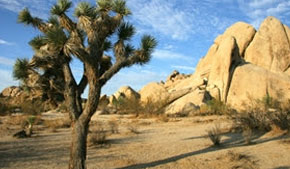 The intriguing beauty of Joshua Tree National Park