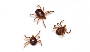 What you need to know about tick safety