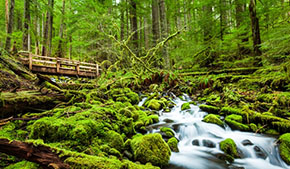 Climate guide: Olympic National Park
